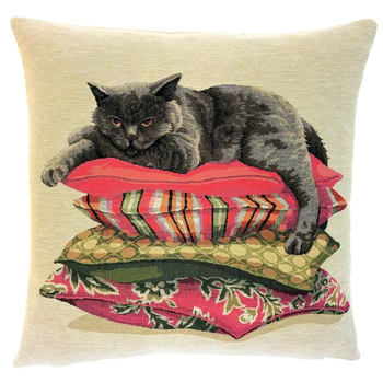 british shorthair on pillow